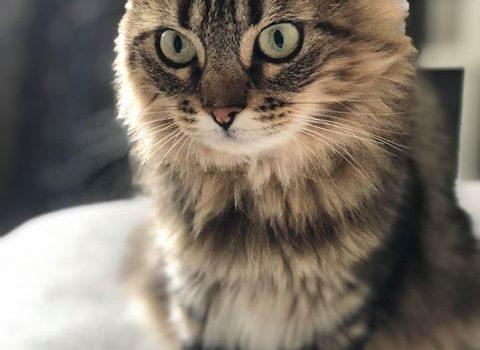 Ozora adoptée