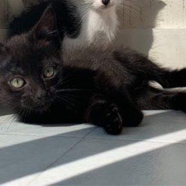 ROCKY à l'adoption