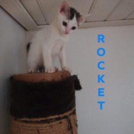 ROCKET adopté